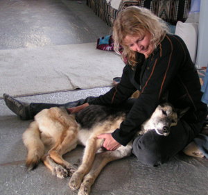 Canine Support for Aging